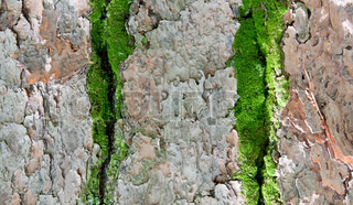 Pine bark and moss textures