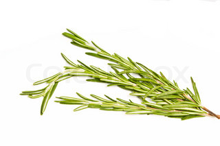 spicy herb rosemary