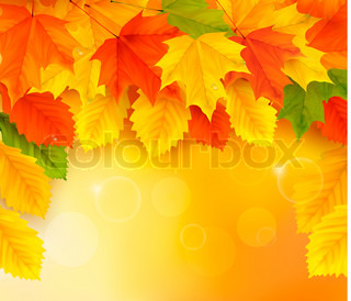 Autumn background with leaves  Back to school