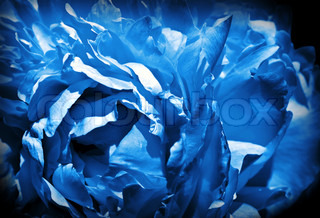 Close-up abstract nature stylized photo of blue flower