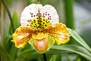 exotic yellow orchid flower with tropical plants