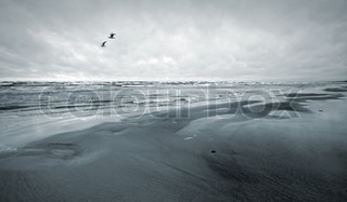 Stylized monochrome photo: Two seagulls and empty coast of the Sea Gulf of Finland, Baltic Sea, Narva-Joesuu, Estonia