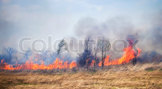 Fire on dry grass and trees in the field inflated by a strong wind