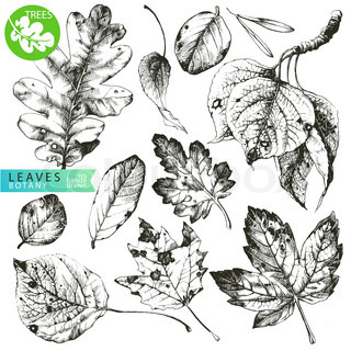 Vintage clip art illustrations of hand drawn leaves isolated on white background