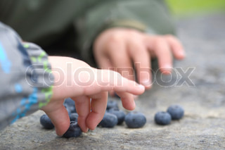 childrens hands picking blueberries