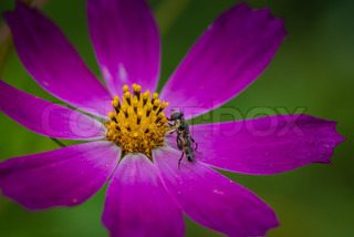 Purple flower with bug