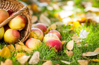 Basket full of red apples