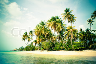 Beach with tropical palm trees