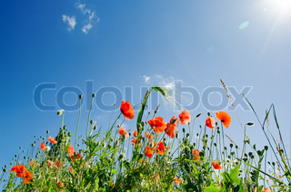 Poppy flowers under sunny sky stock photo colourbox - Impressive house with tranquil environment to get total relaxation ...