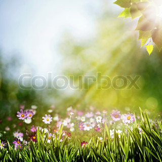 Abstract natural backgrounds with beauty flowers