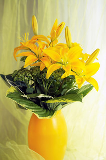 yellow lilies in yellow vase in fron of yellow curtain