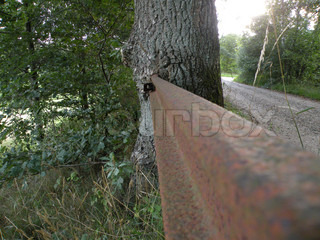 close up of an iron fence growing into a tree