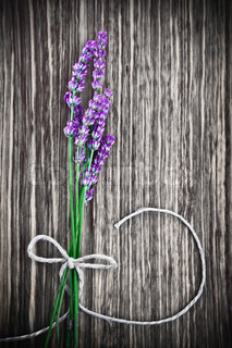 Photo of lavender flower on wooden textured grey background, bouquet of fresh purple flowers with bow on grunge gray tree backdrop, floral border, aroma therapy, herbal medicinal treatment