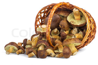 Wicker basket with yellow boletus mushrooms near