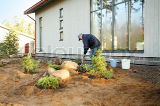 mid-adult male gardener planting trees in his new garden in autumn