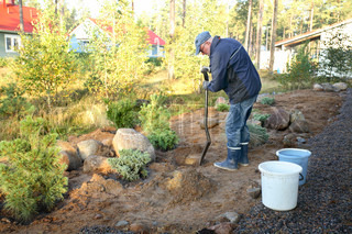 mature gardener in autumn building his garden digging holes for small trees