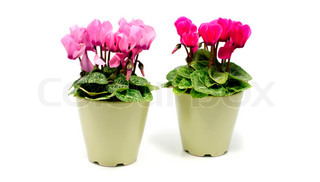 green pots with flowers