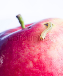 worm move onred apple