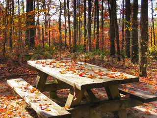 Picnic table in Autumn forest