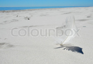 Soft Feather in a Idyllic White Beach