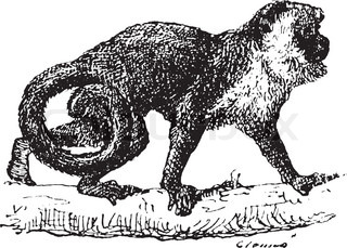 Old engraved illustration of Monkey on the tree branch Dictionary of words and things - Larive and Fleury ? 1895