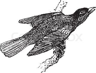 Worter mit vogel