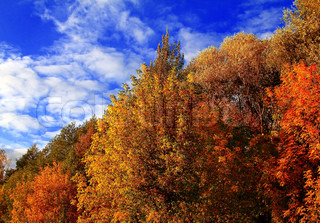Colorful autumn leaves on trees under clouds blue sky Beautiful nature landscape
