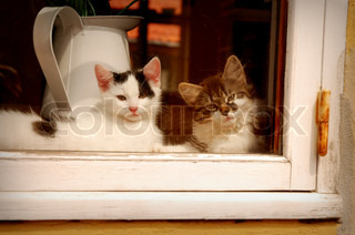 A Pair of Kittens Sitting Looking out of a Window
