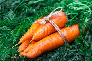 Siingle carrot on green leaf with rope bow