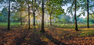Panorama of the oak wood stock photo colourbox - Impressive house with tranquil environment to get total relaxation ...