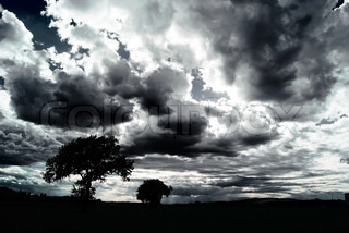 Scary dark scenery with naked trees clouds