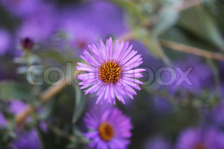 purple flower in nature