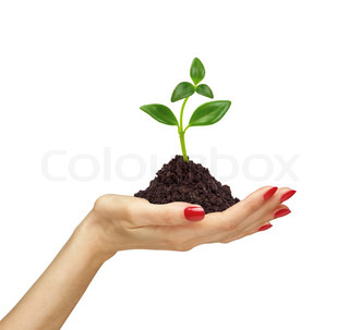 woman's hand holding a plant growing out of the ground, on white