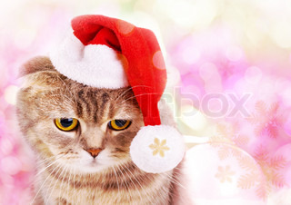 Cute Christmas cat in Santa Claus hat on colorful background