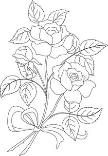 hand drawing illustration   bouquet  roses vector
