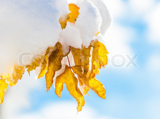 Closeup shot of leaf with snow front blue sky