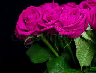 bouquet of pink roses with water drops