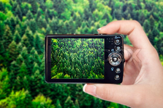 Tourist hand holding camera and taking photograph of green forest