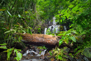 Wild tropical forest Green foliage and waterfall cascade