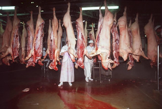 Pigs hanging on butcher assembly line