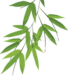 Bamboo leaves, vector