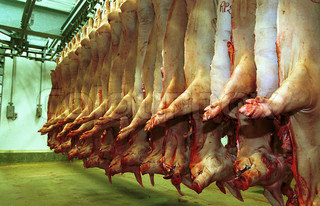 View of dead animals in slaughterhouse