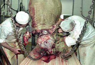Image of 'workers, slaughterhouse, edit'