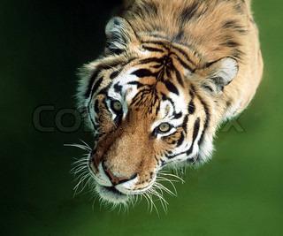 Bild von 'tier, wildlebend, schauend'