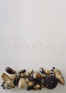 View of seafood with white background