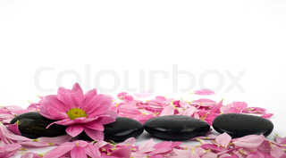 Stones and petal