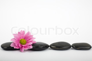 Row of black stones and flower