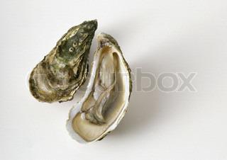 Billede af 'østers, shell, skala'