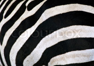 Image of 'patterns, animals, wilderness'
