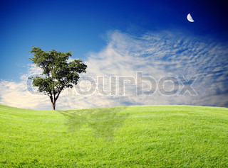 green grass and tree with beautiful sky
